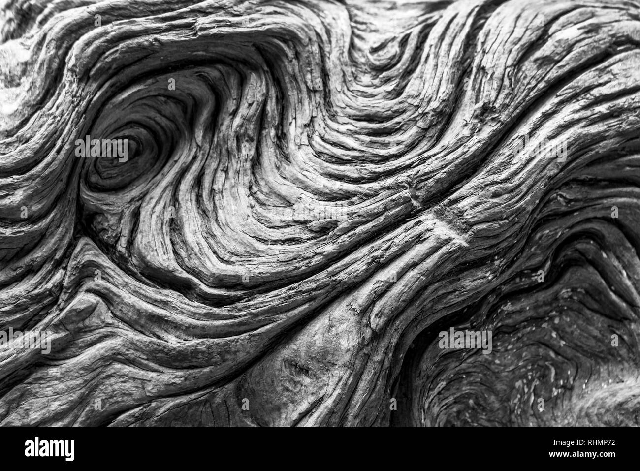 Driftwood detail. Black and white natural textured background - Stock Image