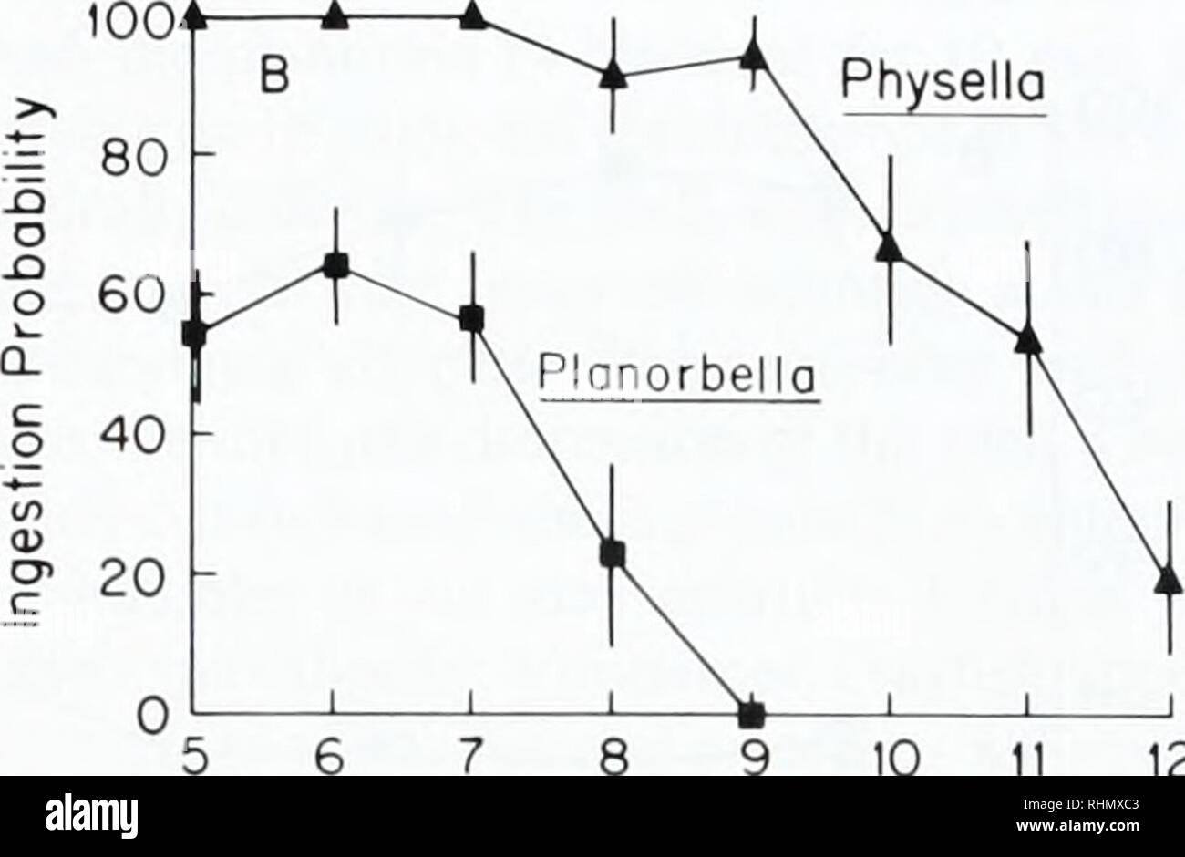 Snail Diagram Zoology 1ikverdiengeldmet