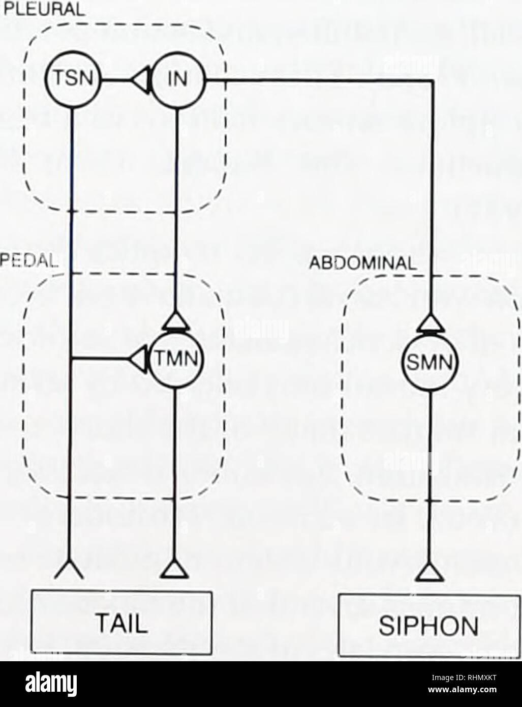 The Biological bulletin  Biology