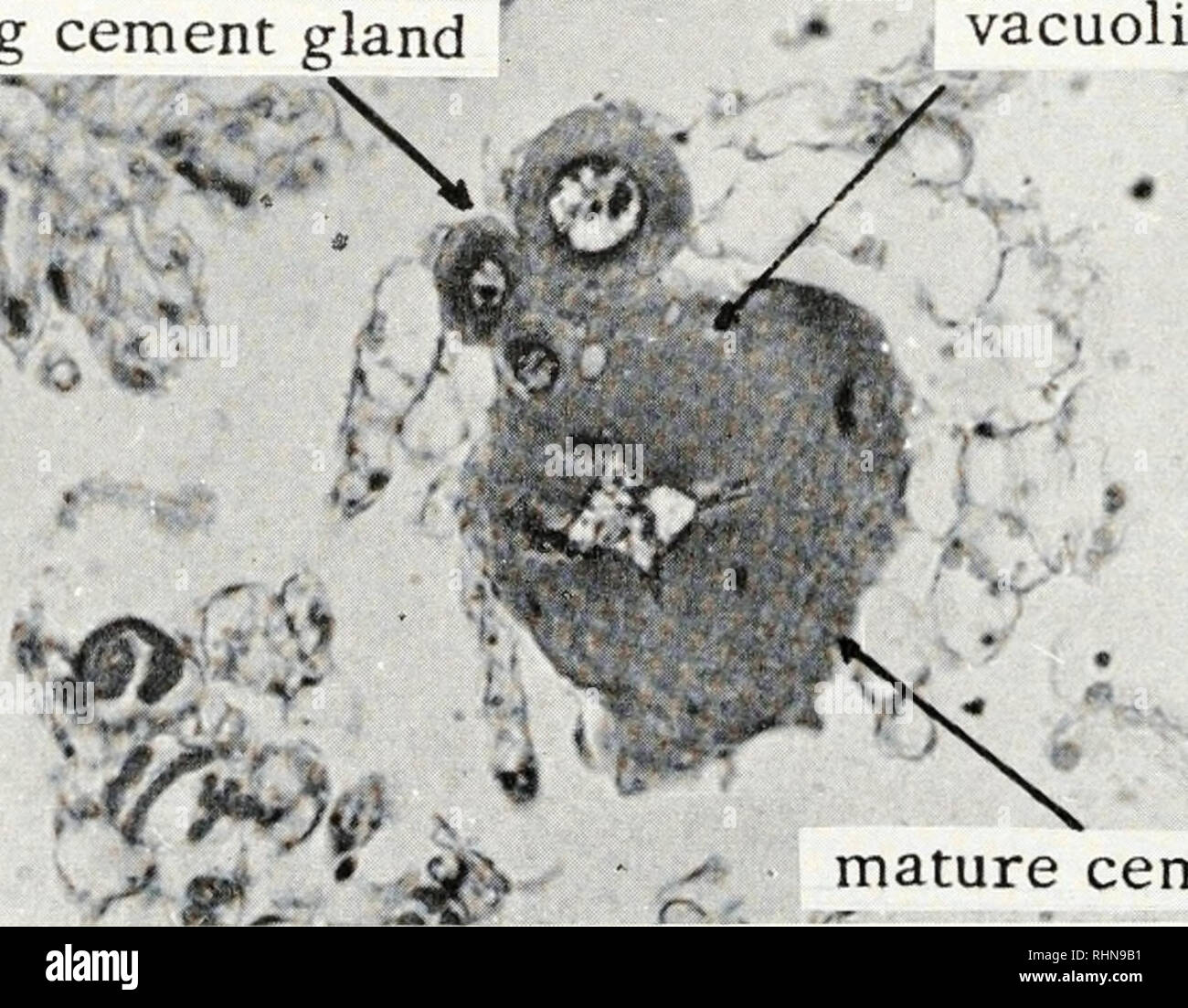 Pesticide Effect On Cells May Resemble >> The Biological Bulletin Biology Zoology Biology Marine