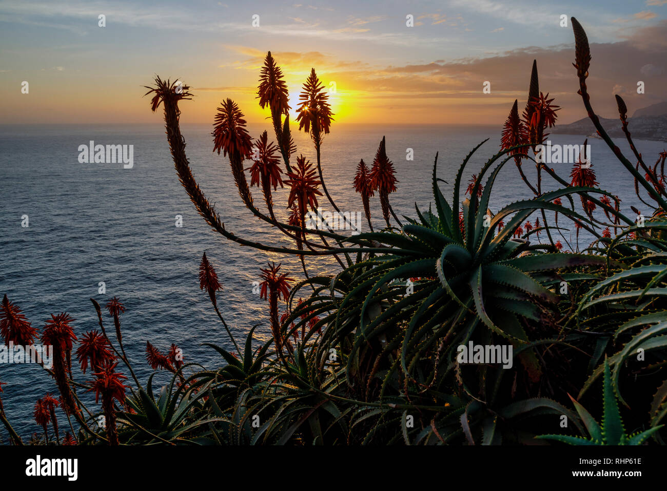 Aloe plants and view from the Cristo Rei viewpoint at sunset, Garajau, Madeira - Stock Image