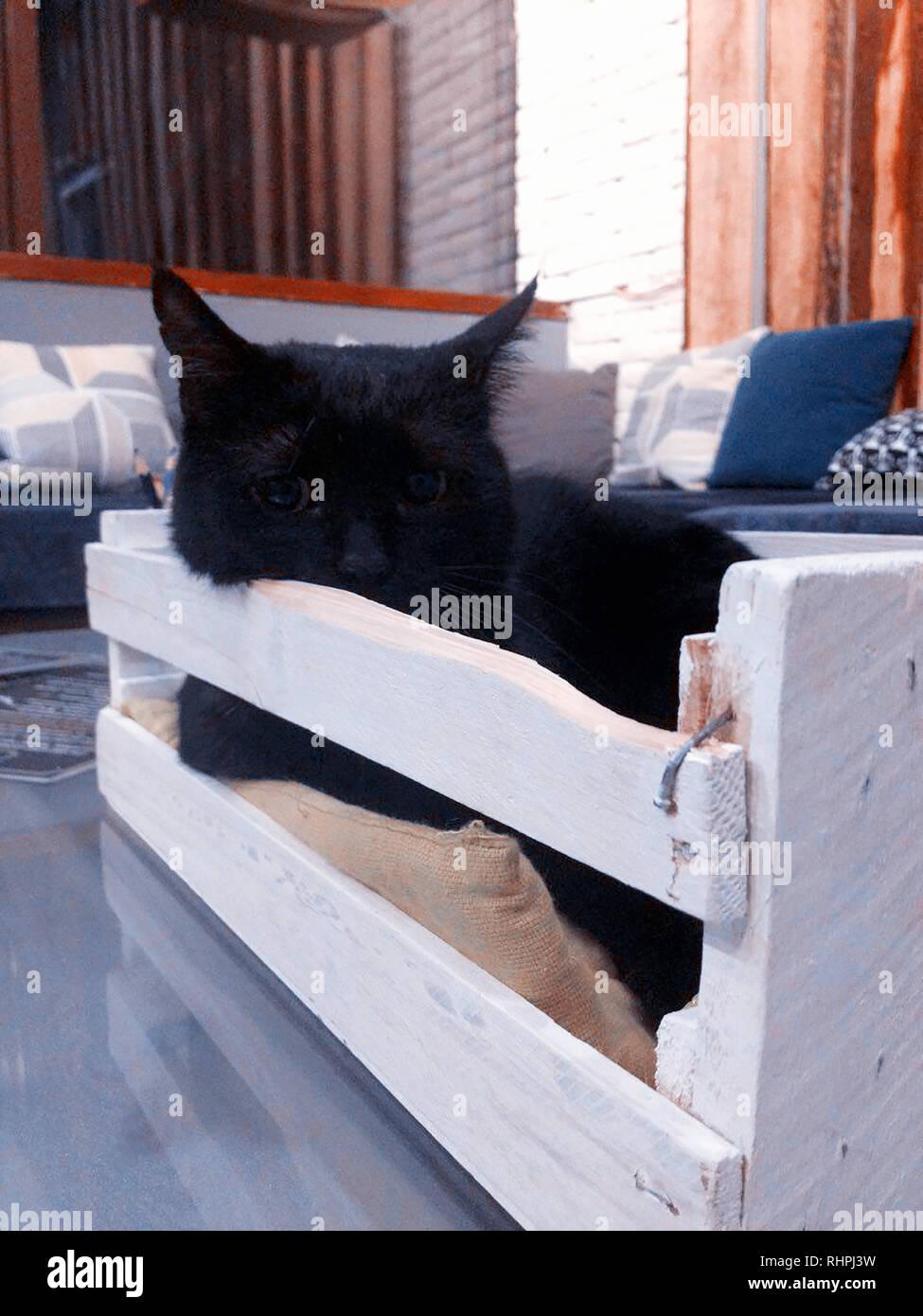 black cat in box - Stock Image