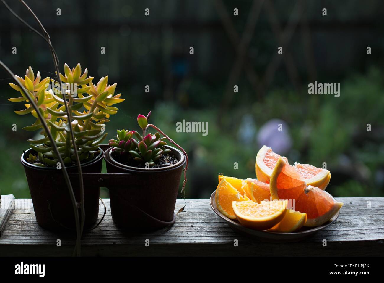 Plants and citrus fruit slices on a porch rail. - Stock Image