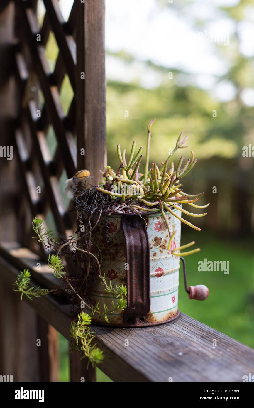 A succulent plant growing in an antique sifter on a porch rail. - Stock Image