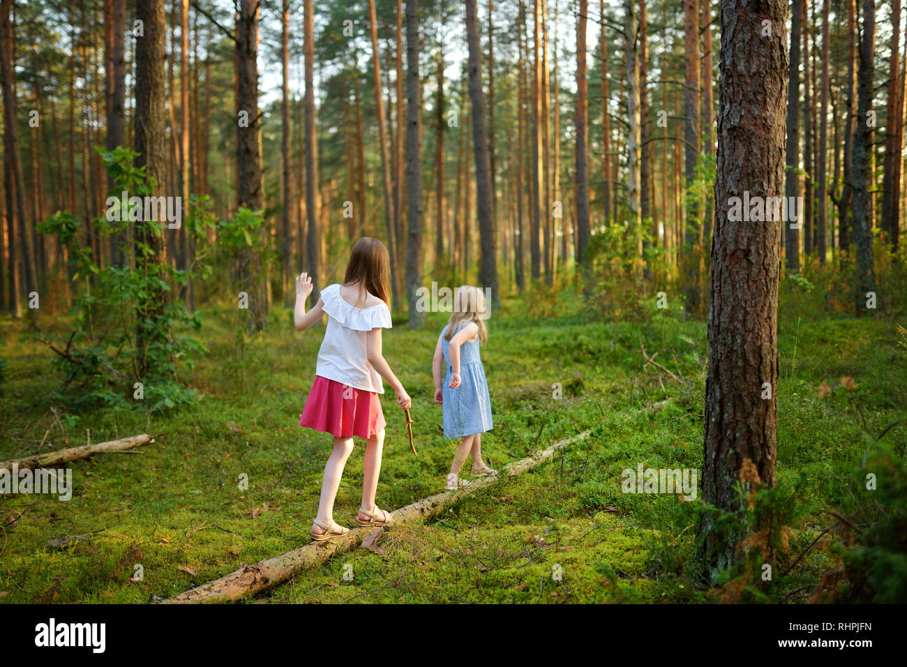 Two cute young sisters having fun during forest hike on beautiful summer day. Children exploring nature. Active family leisure with kids. Family fun. - Stock Image