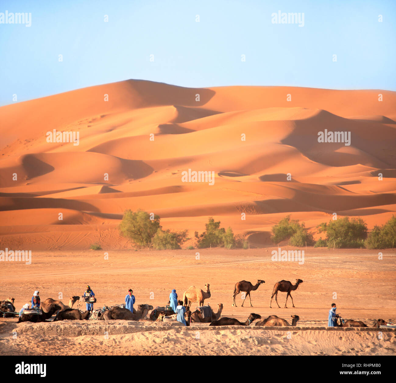 Berbers in traditional clothing and resting camels in Sahara desert, Morocco - Stock Image