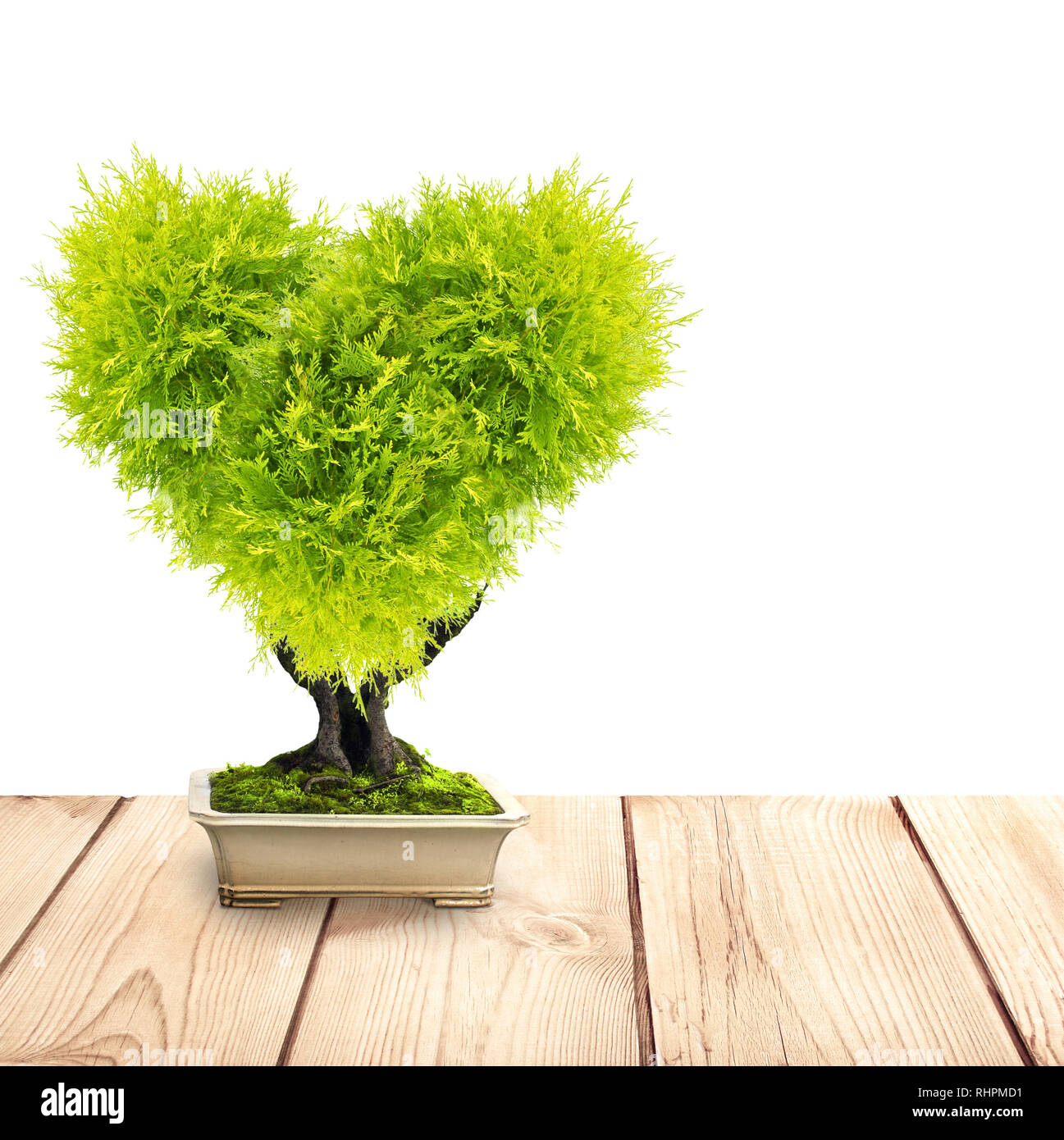 Eco Concept Heart Shaped Tree In Flower Pot On Old Wooden Deck