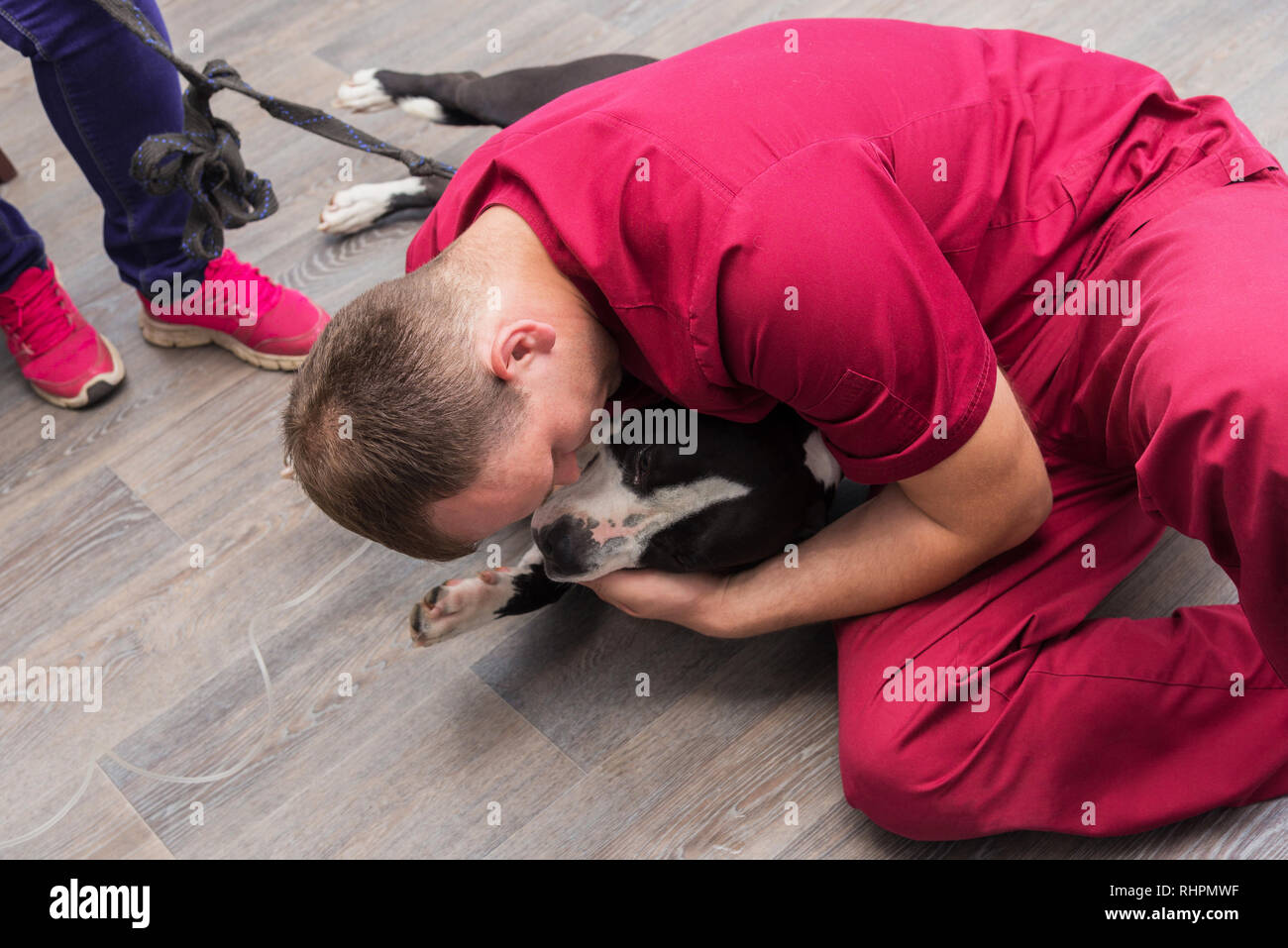 The vet installs a catheter and an IV for a dog at a veterinary clinic. - Stock Image