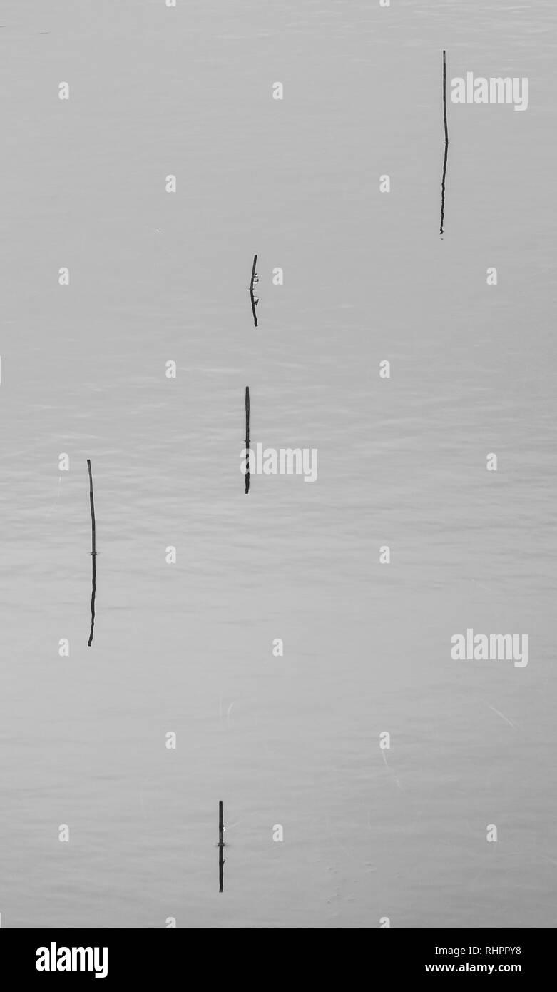 Glencoe loch minimalist shot - grass stems emerging from water - Stock Image