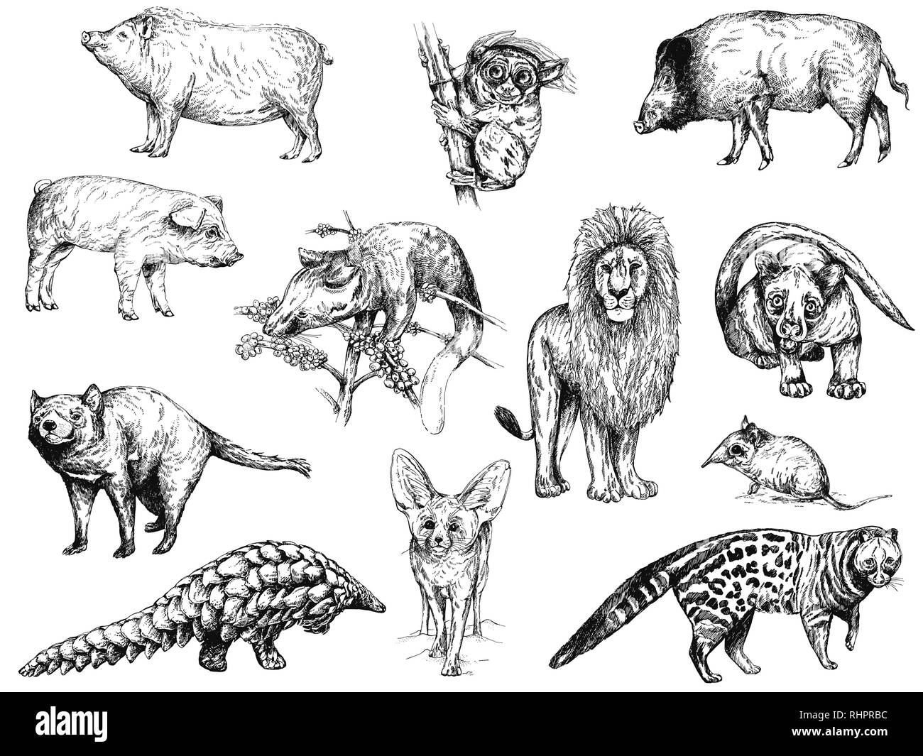 Big set of different hand drawn sketch style animals isolated on white background. Vector illustration. - Stock Image