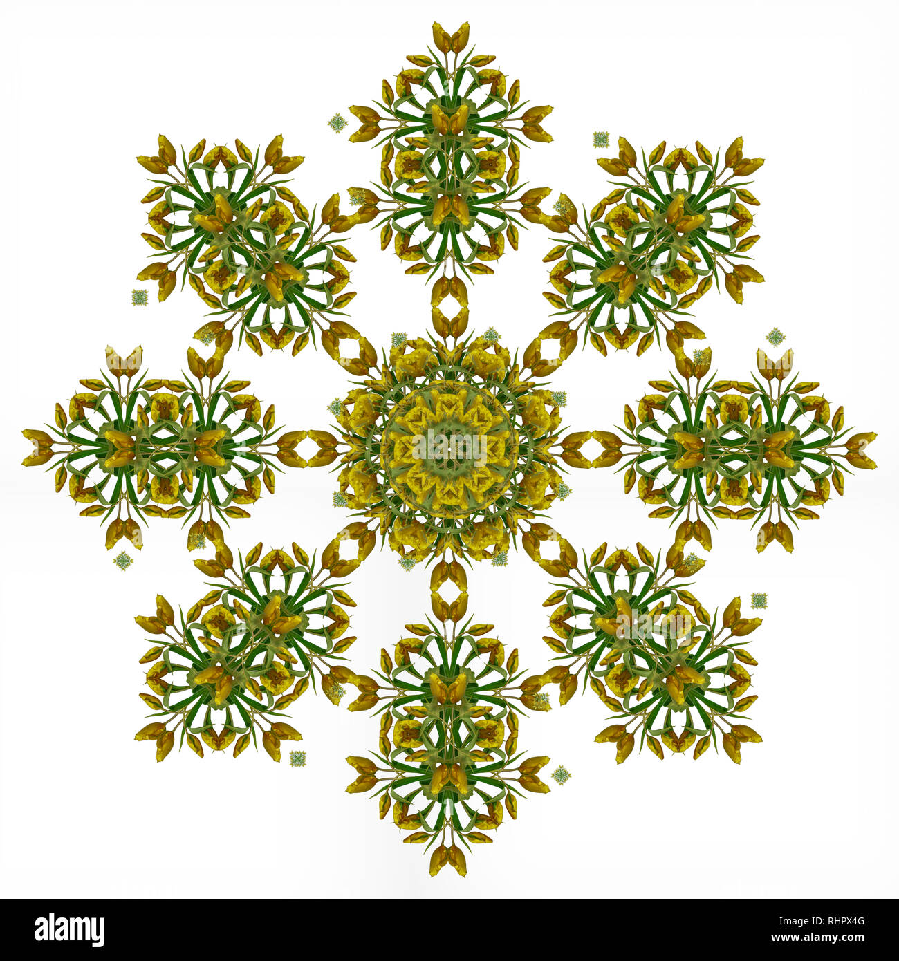 Fine art floral decorative and symmetrical fractal color pattern made from macros of yellow dark green red tulips,white background,vintage painting - Stock Image