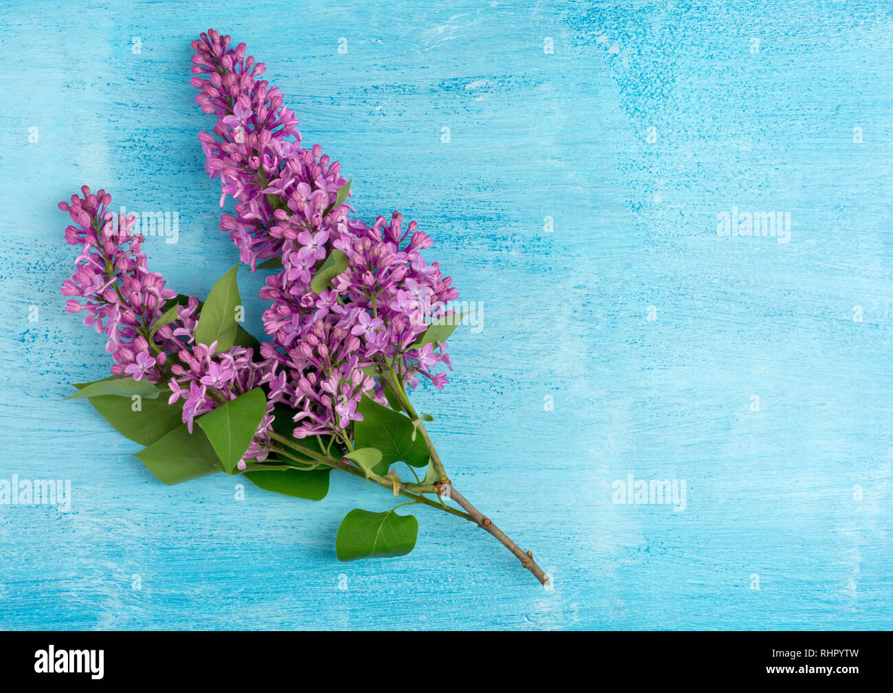 a branch of lilac on a wooden background. copy spaces. - Stock Image