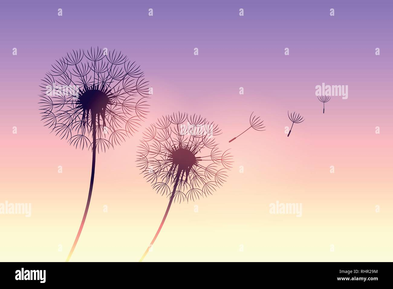dandelion silhouette at purple sunset with flying seeds vector illustration EPS10 - Stock Vector