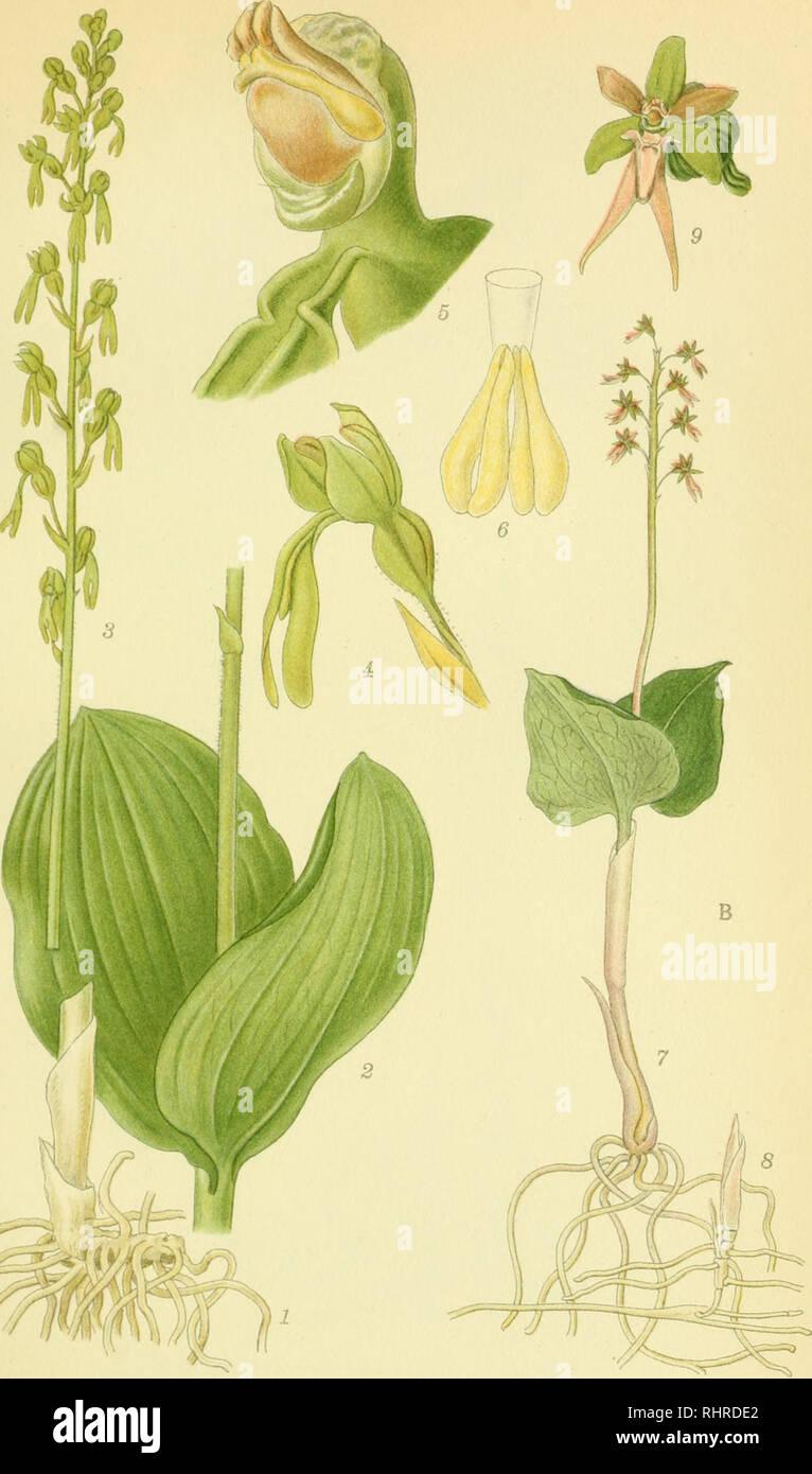 3f91aacdae2 Billeder af nordens flora. Plants; Plants; Plants. m ^. A .