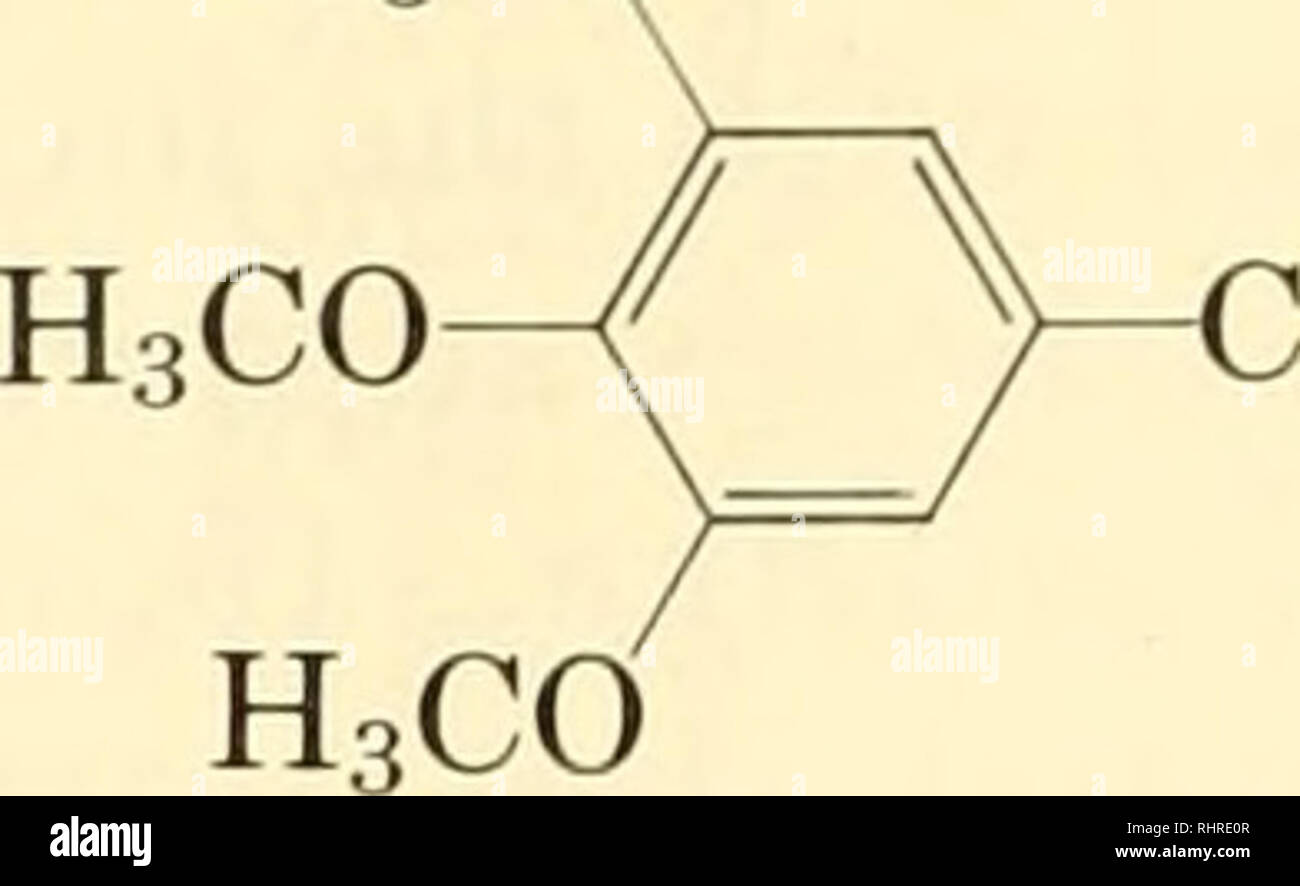 . Biochemical systematics. Biochemical variation; Botany. 158 BIOCHEMICAL SYSTEMATICS H,CO. H2CH2NH2 mescaline ISOQUINOLINE ALKALOIDS This large group of alkaloids may be considered to be deriva- tives of a parent substance, isoquinoline. Like the protoalkaloids they may also be regarded as, potentially, derivatives of pathways con- nected with aromatic amino acid synthesis. isoquinoline The isoquinoline alkaloids range from simple derivatives with a reduced heterocyclic ring and minor substitutions of the benzene ring to very complex alkaloids of the bis-benzylisoquinohne type. The distributi - Stock Image