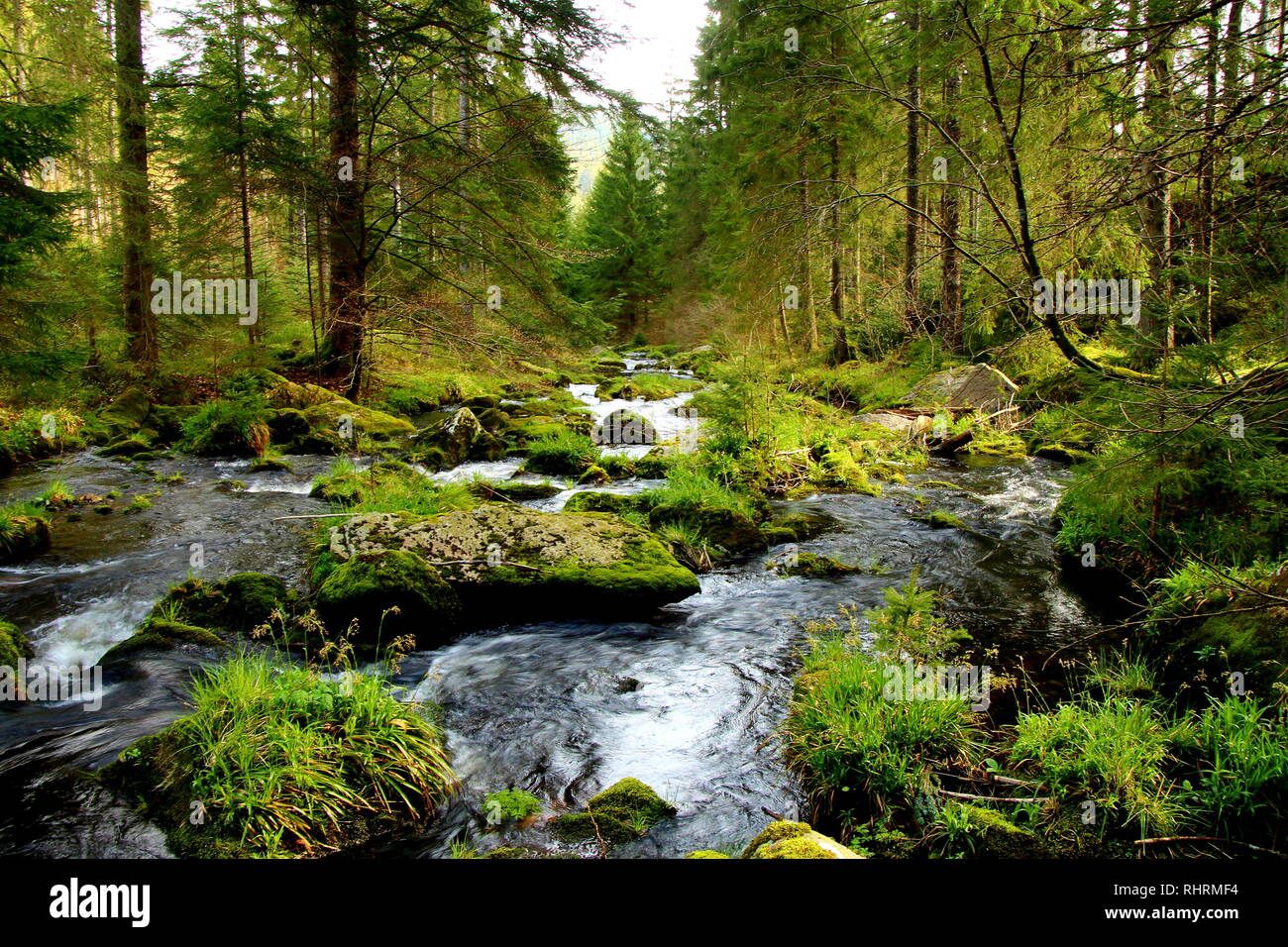Stream in the pine forest on Black Forest mountain. - Stock Image