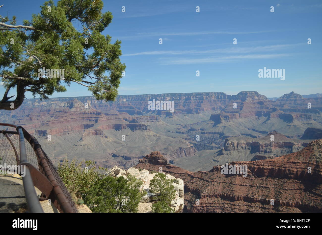 A tree bends over the Grand Canyon, Arizona, USA on a late afternoon in September - Stock Image