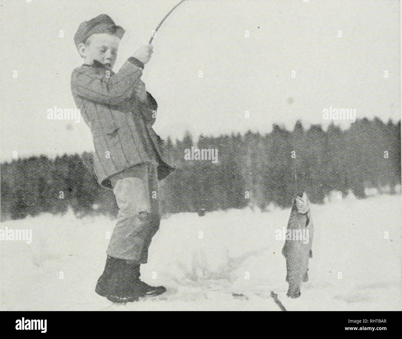 . Biennial report, Montana Game and Fish Commission, State of Montana. Montana Fish and Game Commission; Game protection; Wildlife conservation; Fisheries. TiSH And Game Commission. Bill Peck Catching Four Pound Trout. were of poor quality. Near the close of the season, as an experiment, at two of the lakes, a few thousand eggs were placed in hatching bas- kets and held until eyed before taking to the hatchery. These eggs turned out very much better, convincing me, as I had before thought, that the eggs must be eyed at the spawning stations to secure the best results. At Fish Lake, near Stryke Stock Photo