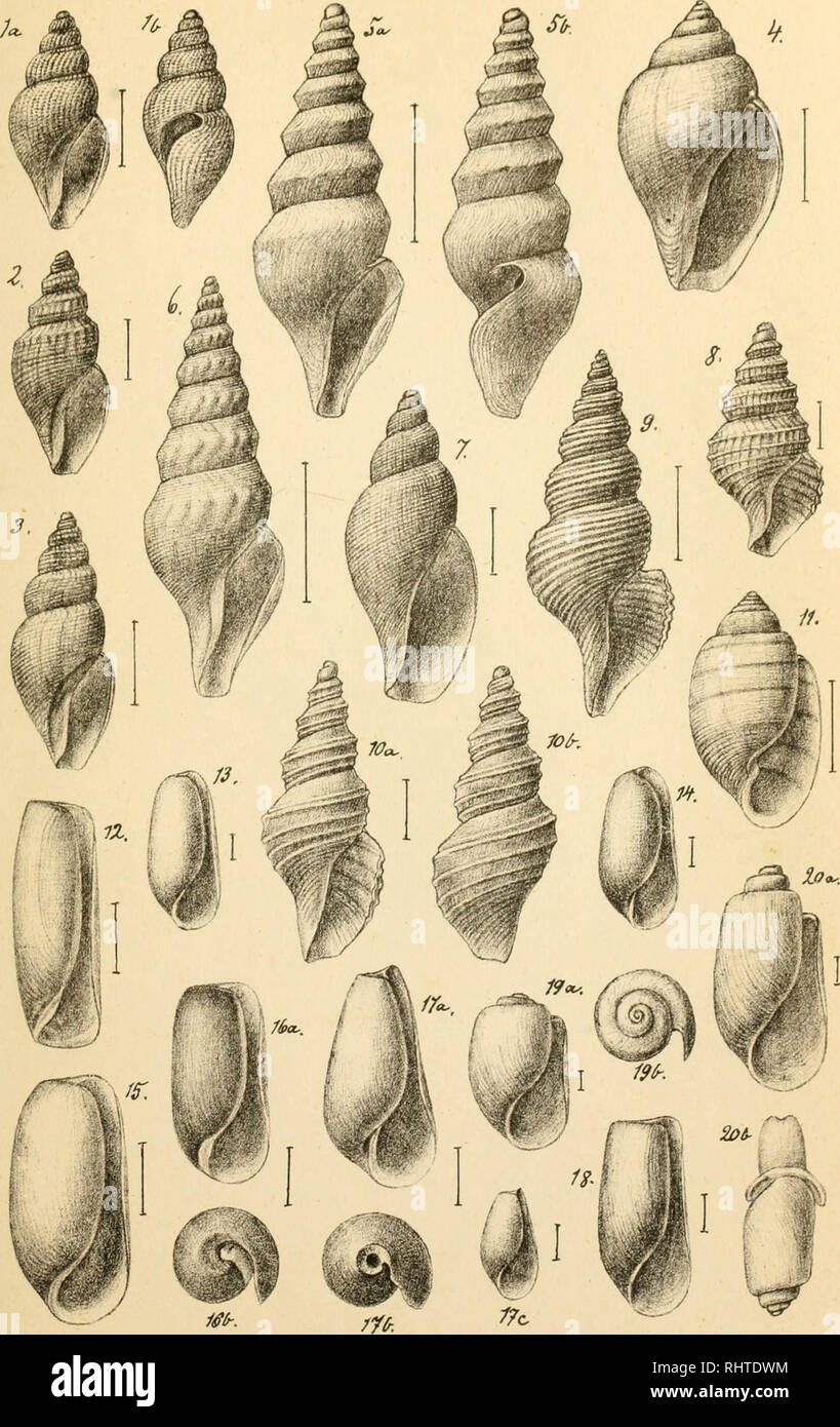 . Bidrag til kundskaben om norges arktiske fauna. oversigt over de i norges arktiske region forekommende bløddyr. Mollusks. TcO-./?'.. é^.O.SecrS a,e^to^r: Z.Fekrfli^à .lnsi.. Please note that these images are extracted from scanned page images that may have been digitally enhanced for readability - coloration and appearance of these illustrations may not perfectly resemble the original work.. Sars, G. O. (Georg Ossian), 1837-1927. Christiania : Brøgger - Stock Image