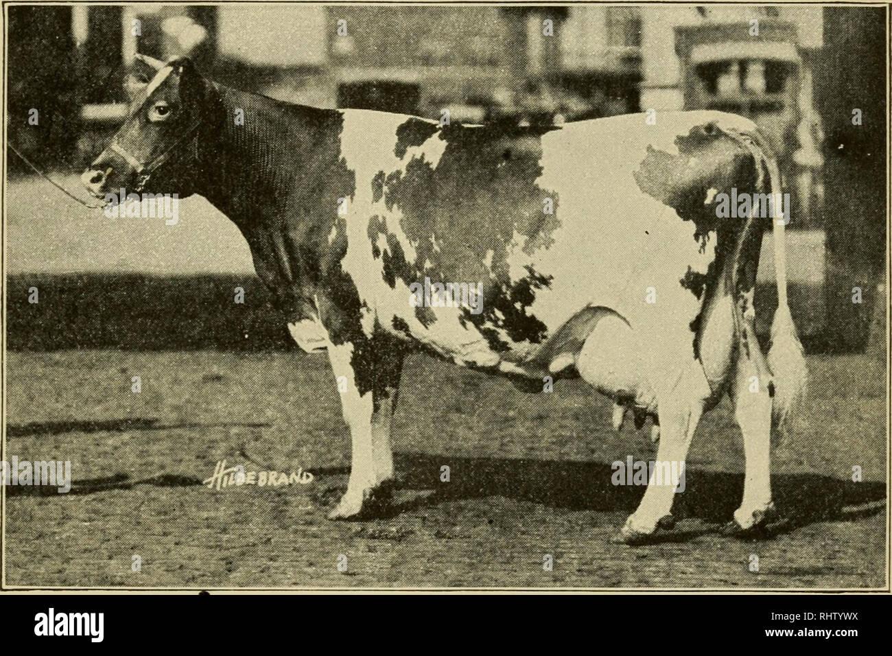 Better dairy farming