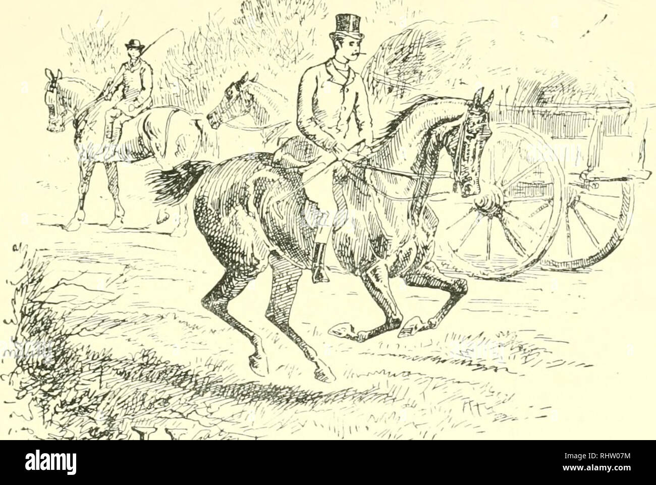 ". The best season on record : selected and republished from ""The field"". Horses; Fox hunting. CHAPTER XV. E. G. '!^^jr. a man but to write a single sample, entitle it "" A Day with tlie Quorn,"" and set to work upon it as if the army of hunting correspondents and descriptors had never been called into being to wear a subject to its barest threads —he might do worse than take Friday, January 18th, for his subject. He would begin of course by drawing a lively picture of the gay meet before the old feudal Hall, descant upon the bevy of brightness and beauty on. Please note that  - Stock Image"