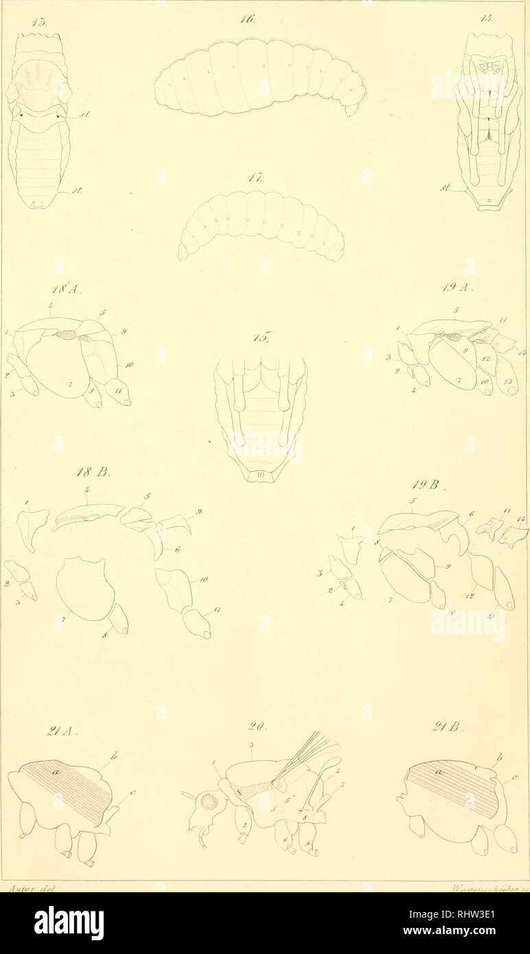. Berliner entomologische Zeitschrift. Entomology; Insects. Berufter fyiAfni Zg<M'c/tr. //<£;?. 'ncf /l.. Please note that these images are extracted from scanned page images that may have been digitally enhanced for readability - coloration and appearance of these illustrations may not perfectly resemble the original work.. Berliner Entomologischer Verein. Berlin : Berliner Entomologischer Verein Stock Photo