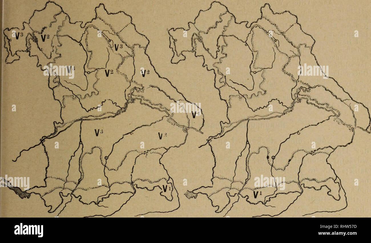 . Berichte der Bayerischen Botanischen Gesellschaft zur Erforschung der heimischen Flora. Botany; Botany. — 49 —. Ranunculus sardöus Crantz. Ranunculus hybridus Biria. Ranunculus sardöus Crantz. Rauher Hahnenfufs. Diese Art ist 2j ährig, selten ljährig oder ausdauernd. Der Wurzelstock der ausdauernden Formen ist sehr kurz; Wurzeln der 1- und 2jährigen faserig; Stengel aufrecht, am Grunde nicht verdickt, vielblütig, von abstehenden Haaren rauh, selten kahl; Haare am unteren Teile des Stengels abstehend, am oberen angedrückt; die ersten, zur Blütezeit oft noch vorhandenen wurzelständigen Blätter - Stock Image