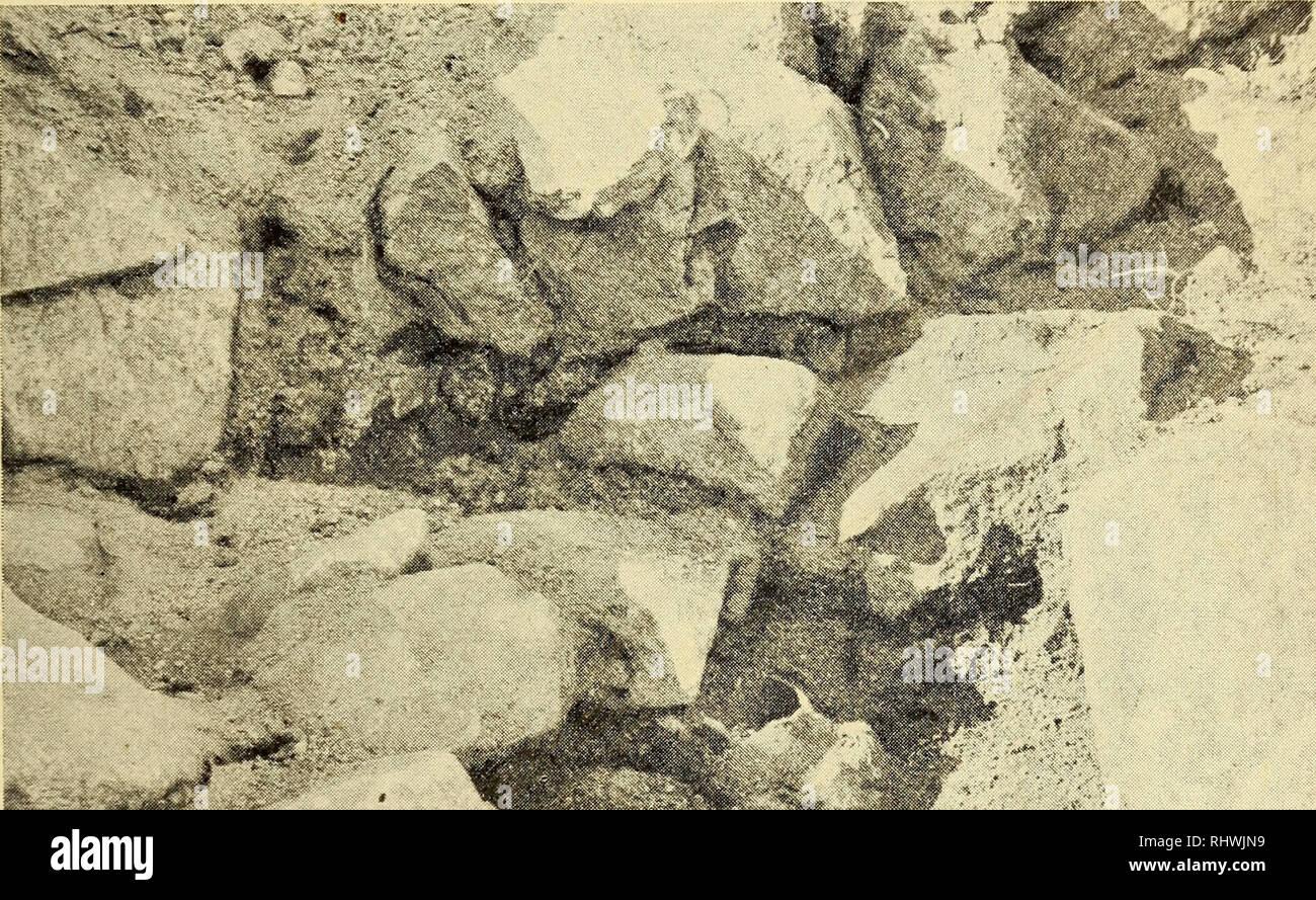 . Bergens Museums aarbok. Science; Natural history. En vestnorsk gray med romerske glasbægere. 17 nu av blir almindelige og hvorav enkelte har bronsebeslag over det hele, mens andre kun er forsynt med smale bronseringer. Til disse enklere trækar har spandet i den her foreliggende grav hørt. Blandt de faa fragmenter som er bevaret er det ene et stykke av mundningen med et paasittende smalt bronsestykke. Hadden har været dannet av en tynd jemten. Paa grundlag av de bevarede fragmenter lar spandets vidde sig saaledes ikke be-. X. Fig. 12. Lerkar in situ i graven. stemme, men dette blir mulig ved  - Stock Image