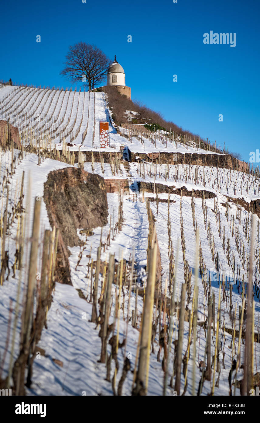 Radebeul, Germany. 04th Feb, 2019. Blue skies over the snow-covered vineyard and the Jacobstein on the Winery Schloss Wackerbarth. Since 1991, the Schloss Wackerbarth Saxon State Winery, a wine and sparkling wine manufactory, has been established in the castle. Credit: Monika Skolimowska/dpa-Zentralbild/dpa/Alamy Live News Stock Photo