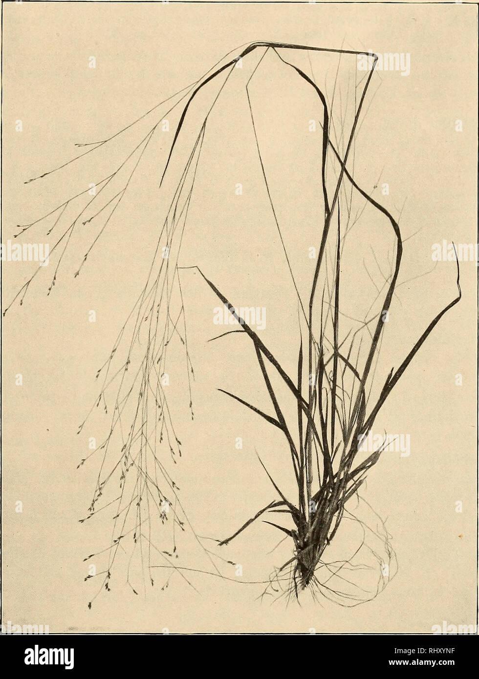Findes også i: Müllers Pinakotek Bd.