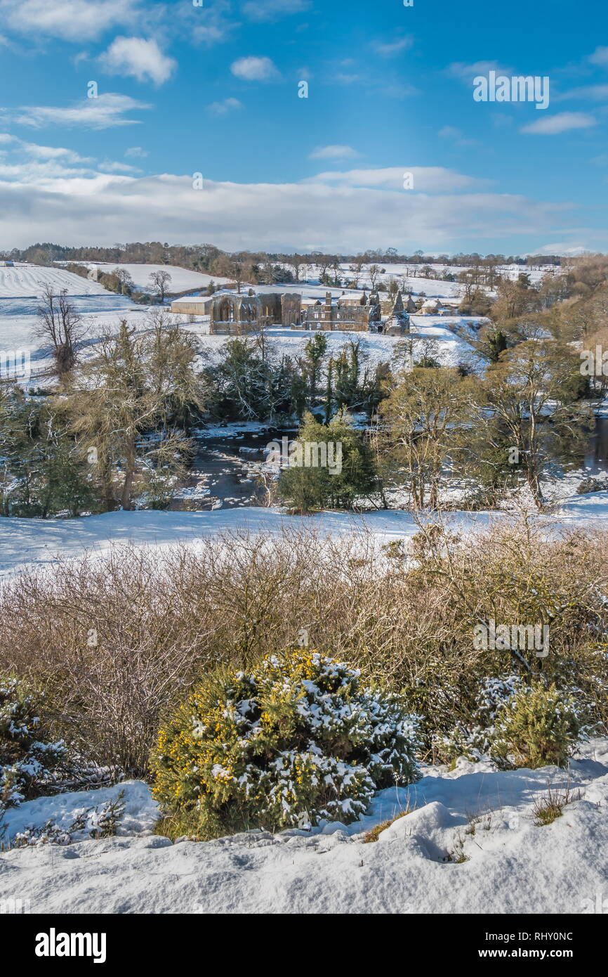 Egglestone Abbey, Barnard Castle, Teesdale in a snowy landscape and winter sunshine with a flowering Gorse bush in the foreground - Stock Image