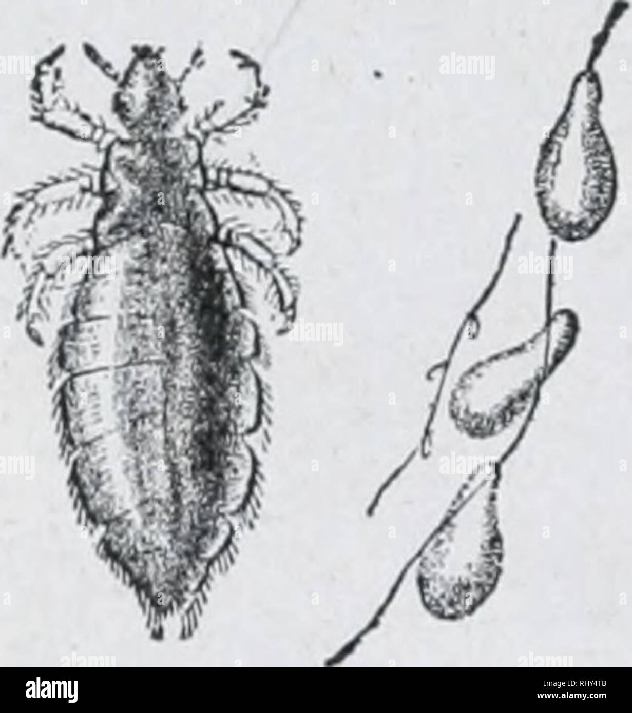 Beginners zoology  Zoology  Fig  173  — Metamorphosis of