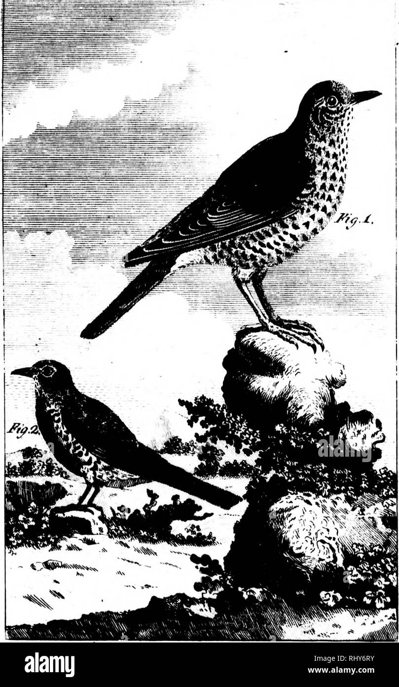 ". The natural history of birds [microform] : from the French of the Count de Buffon. Ornithology; Birds; Ornithologie; Oiseaux. SiC. is diftln- tie other I large as affert t i perhaps it vith us. ered the excepting edly ac- Thrufh, In h, Garatauk : Ifano, Gafotto, ig, Schnarrct cha, Cnapio: majhr of the :. 24.âVarro I berries of the ^tbi caci^t; that parafne :Â¥t7i 7^. riO.l. Til£ :IVIISS£I. BIKD.rn>.2.'rJEtE TI1KOSTI.E. ,*!.. *r i-t.vu lv:/ .1 ' !-i:>: !i* '"" c:^:^t m 11 .at m. ""â¢-.â¢^. 4iÂ« '''â II . r. .'.â ,!. ;>â ». Please note that these images are extracted fr Stock Photo"