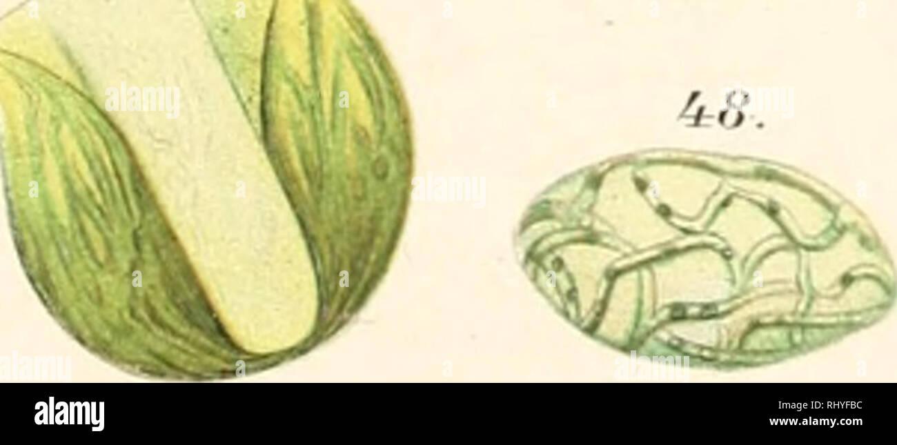 Beitrge zur Biologie der Pflanzen  Plant physiology
