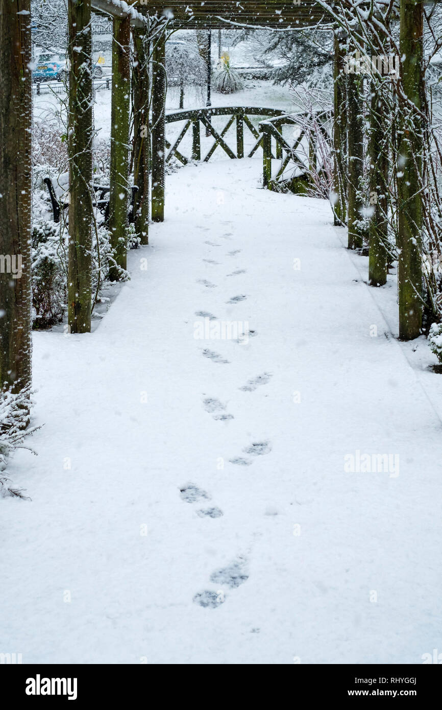 Footsteps in the snow in a wooden pergola in a garden. - Stock Image
