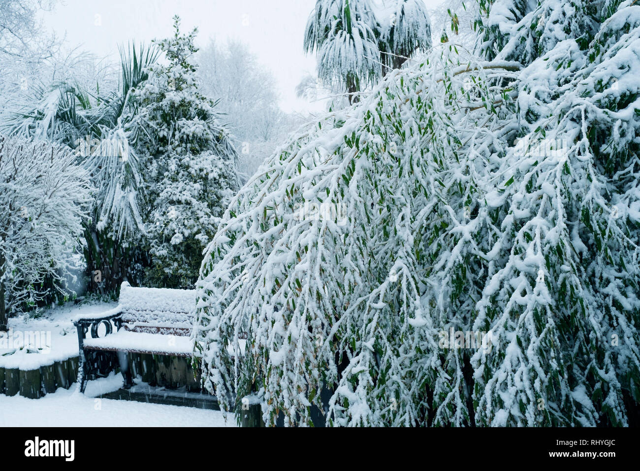 Plants in Trenance Gardens covered in snow in Newquay in Cornwall. - Stock Image