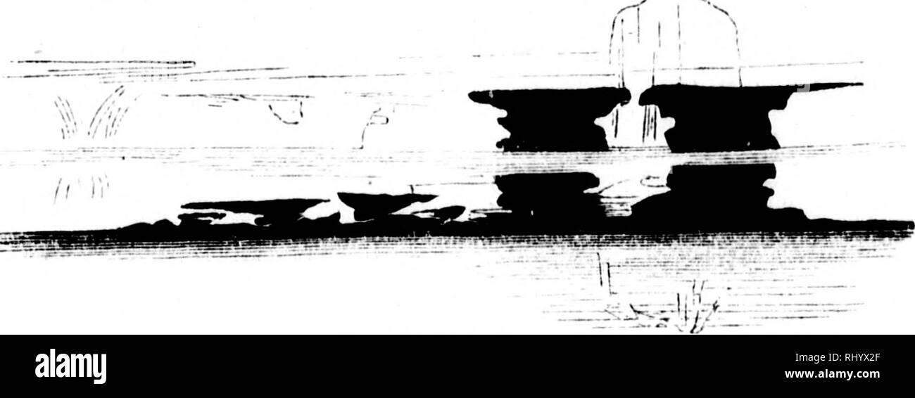 . Die Franklin-Expedition und ihr Ausgang [microform] : Entdeckung der nordwestlichen Durchfahrt durch Mac Clure [sic], sowie Auffindung der Ueberreste von Franklin's Expedition durch Kapitän Sir M'Clintock, R.N. L.. Franklin, John, Sir, 1786-1847; McClure, Robert, Sir, 1807-1873; McClintock, Francis Leopold. 1819-1907; Franklin, John, Sir, 1786-1847; McClure, Robert, Sir, 1807-1873; McClintock, Francis Leopold. 1819-1907; Natural history; Sciences naturelles. 2IS T^aS ^flai^cuftcib bei  U>Iavläubcv. Hb' uub d)zn au^ tuic frei id)n)cbcnl)c kugeln. (ildHiJcfc ücvläuöcvu fid) uunatüv= lid) n - Stock Image