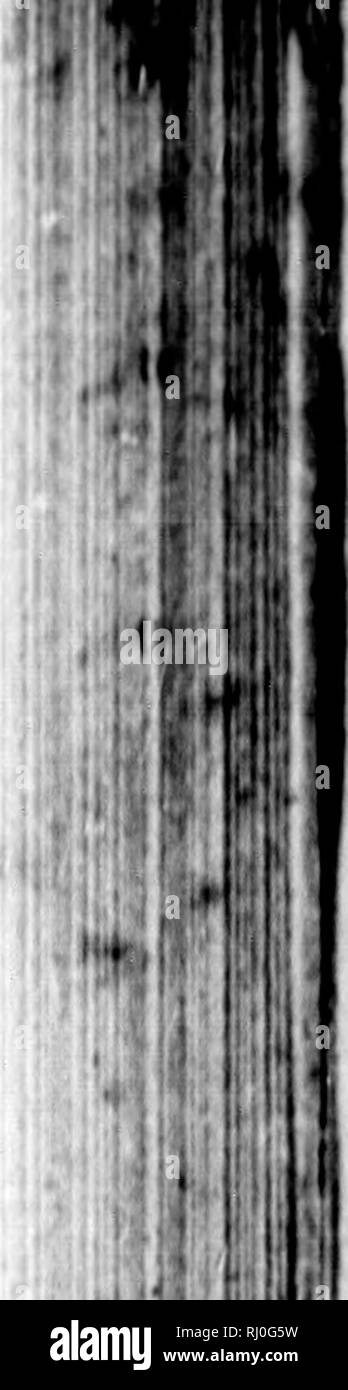 Piel Black And White Stock Photos Images Alamy