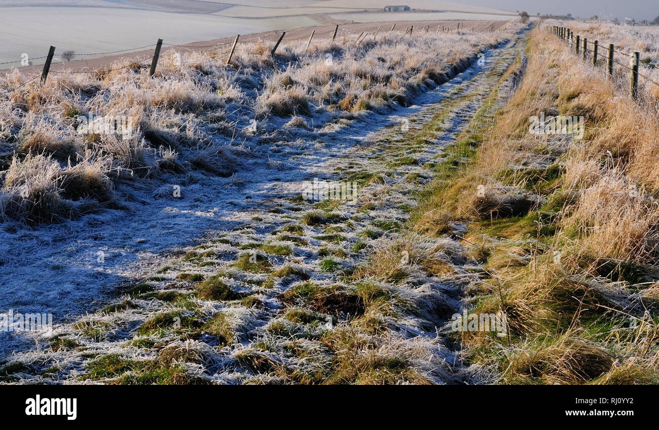 A hard frost along tthe route of the Old Bath Road heading towards White Horse Plantation on Cherhill Down (now part of the Wessex Ridgeway trail). Stock Photo