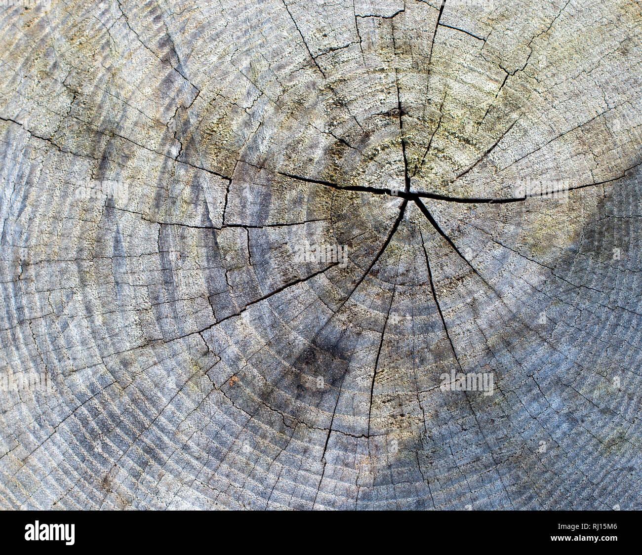 tree stub texture background - Stock Image