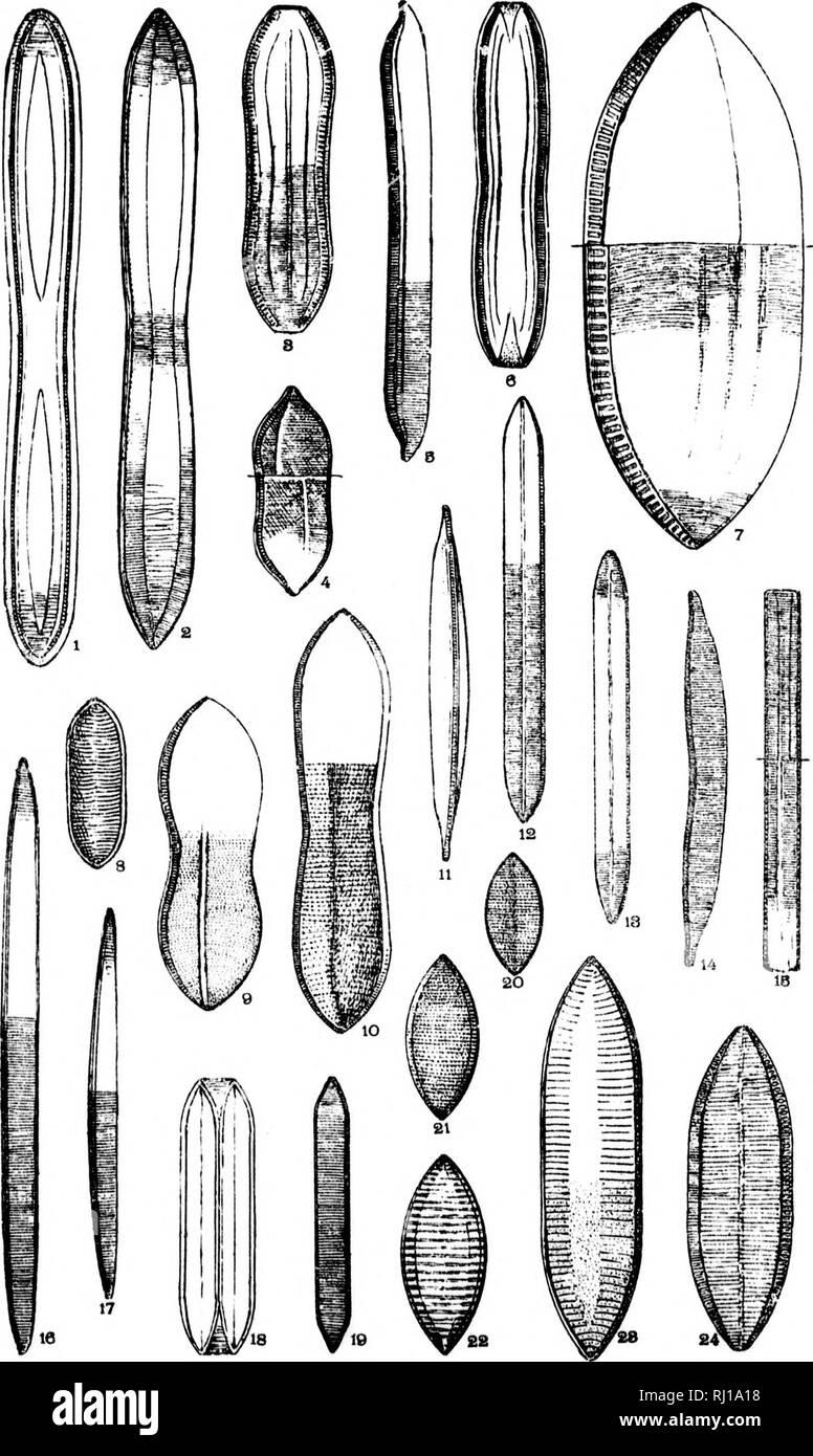 . Diatomaceæ of North America [microform] : illustrated with twenty-three hundred figures from the author's drawings on one hundred and twelve plates. Diatoms; Algae; Diatomées; Algues. Plate :a,iv. I f ' hi M l if ! â pi :.a. Please note that these images are extracted from scanned page images that may have been digitally enhanced for readability - coloration and appearance of these illustrations may not perfectly resemble the original work.. Wolle, Francis, 1817-1893. Bethlehem, Pa. : Comenius Press - Stock Image