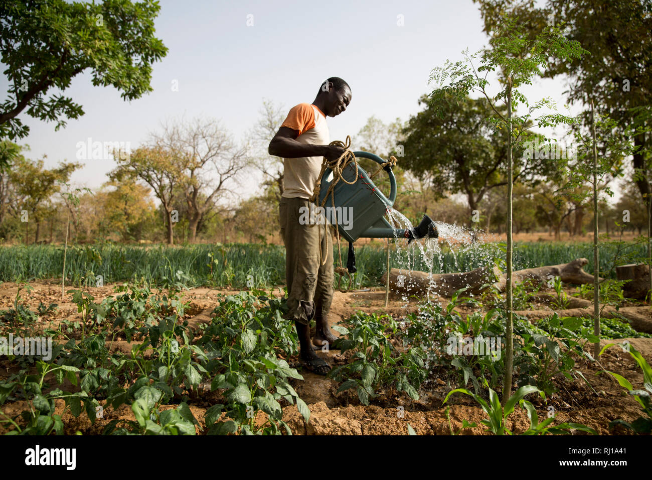 Samba village, Yako Province, Burkina Faso: Portait of Denis Zoundi, 45,with tribal scars, while watering crops on his market garden. Stock Photo