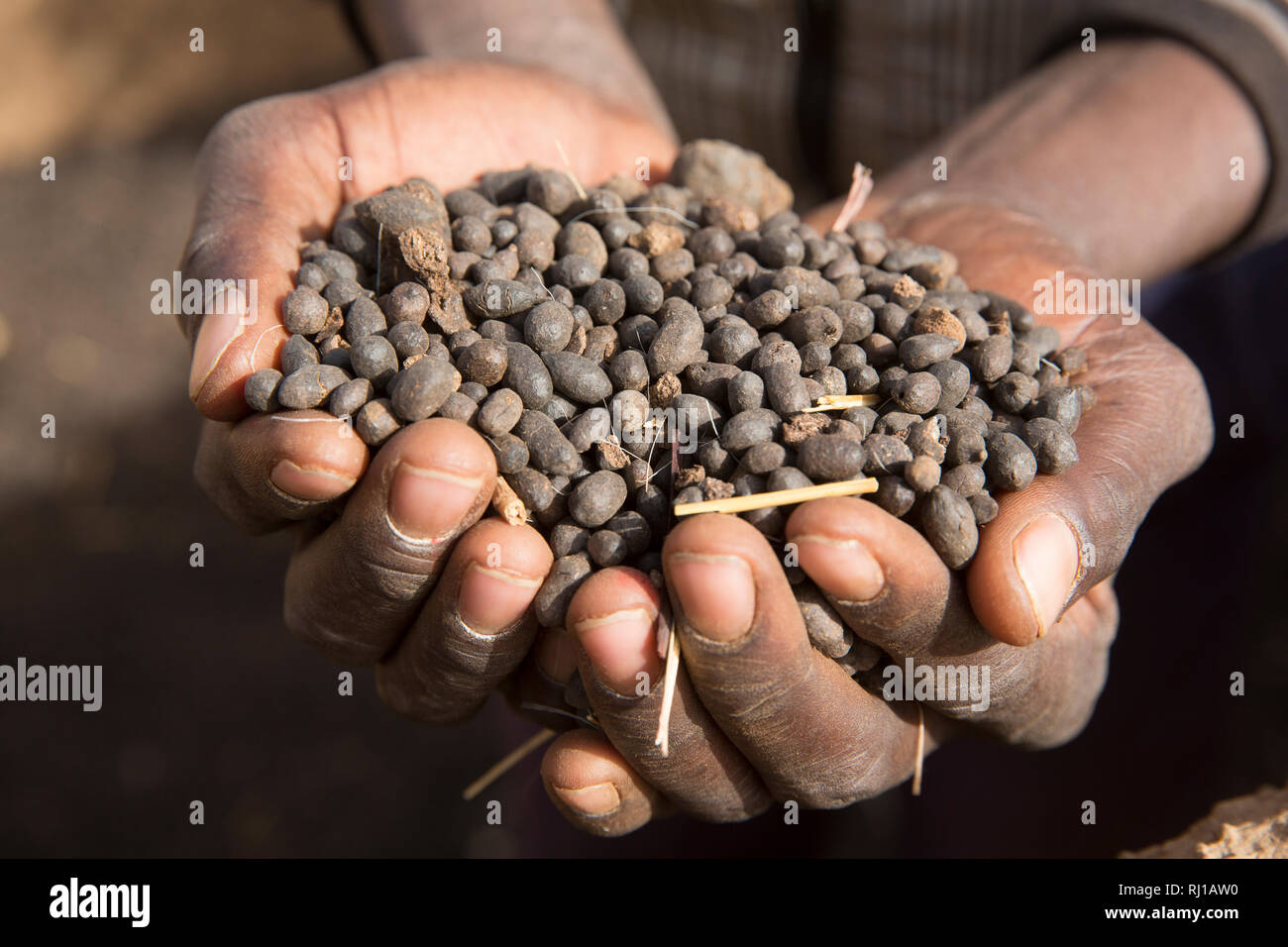 Kourono village, Yako province, Burkina Faso; Moussa Mande, 54, goat project beneficiary, with goat droppings he will use to fertilize his crop fields. Stock Photo