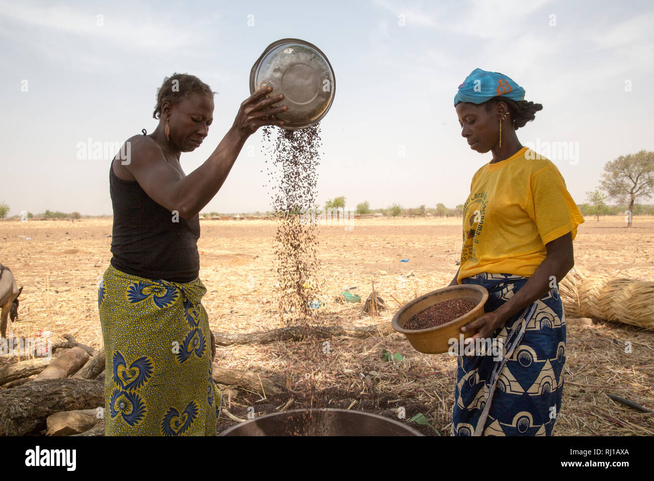 Kourono village,Yako province, Burkina Faso. left, Minata Guiguemde, 37, with 5 children, and Kadissa Seogo, 30 with 2 children, winnowing sorghum. Kadissa benefitted from the goat project. Stock Photo