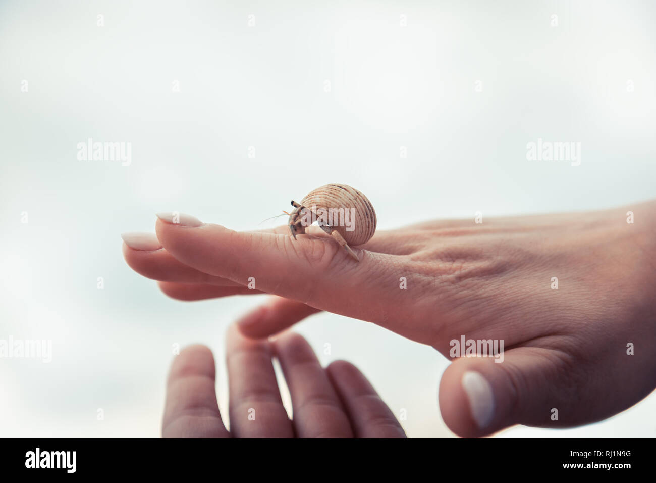Hand holding carefully sea turtle in turtle farm nursery concept help care way forward - Stock Image