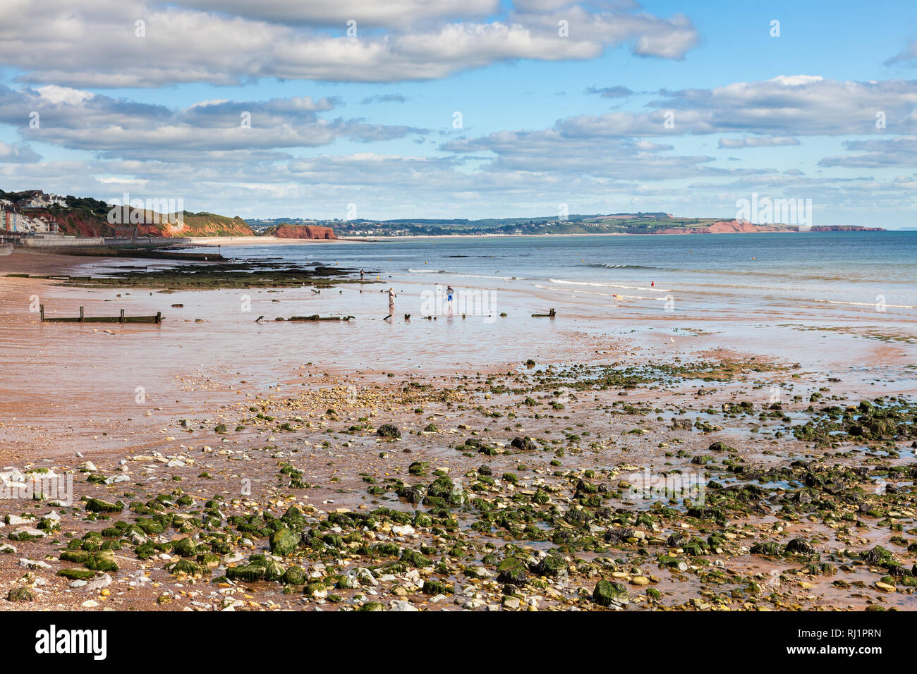 Summer overlooking the beach at Dawlish Devon England UK Europe Stock Photo
