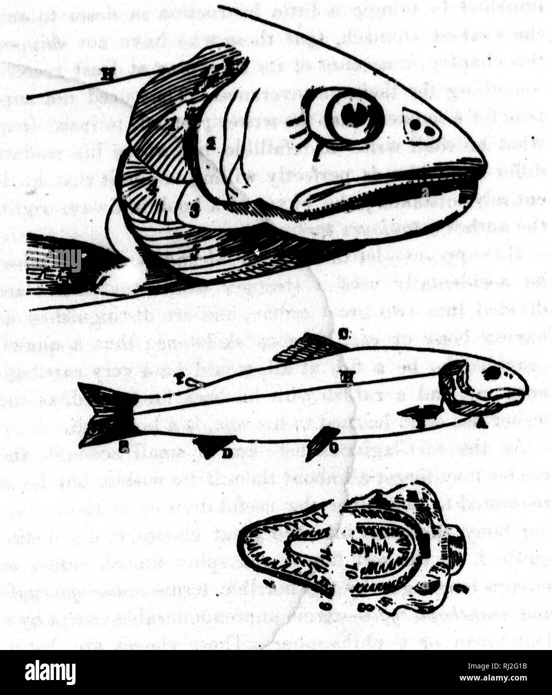 the game fish of the northern states and british provinces [microform] :  with an account of the salmon and sea-trout fishing of canada and new  brunswick,