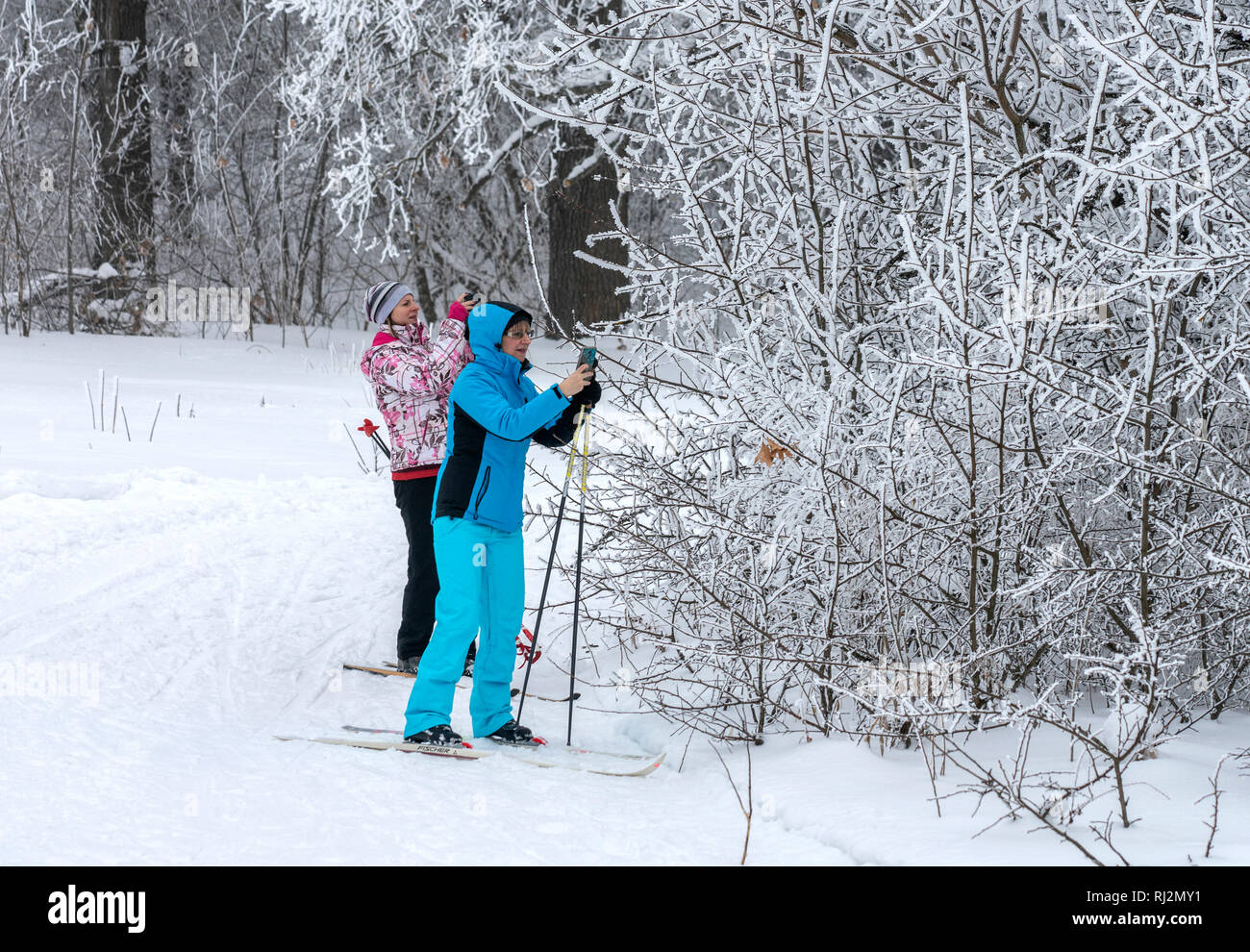 Two skiers stopped near the Bush and take pictures of frost on the branches on their smartphones - Stock Image