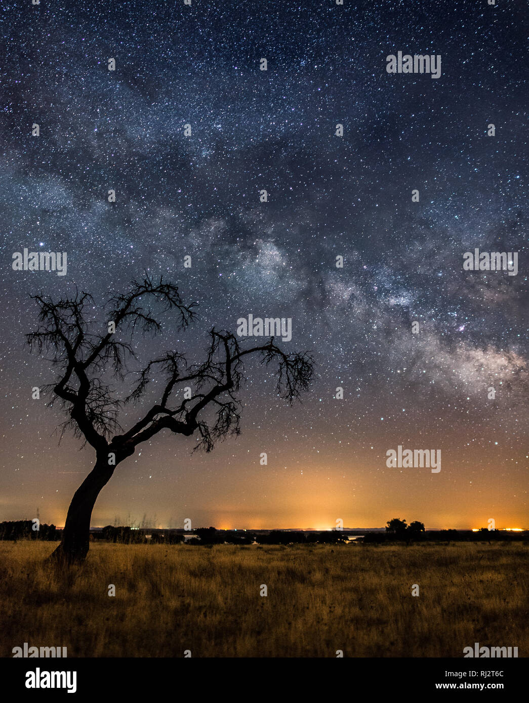Astrophotography with a single tree - Stock Image