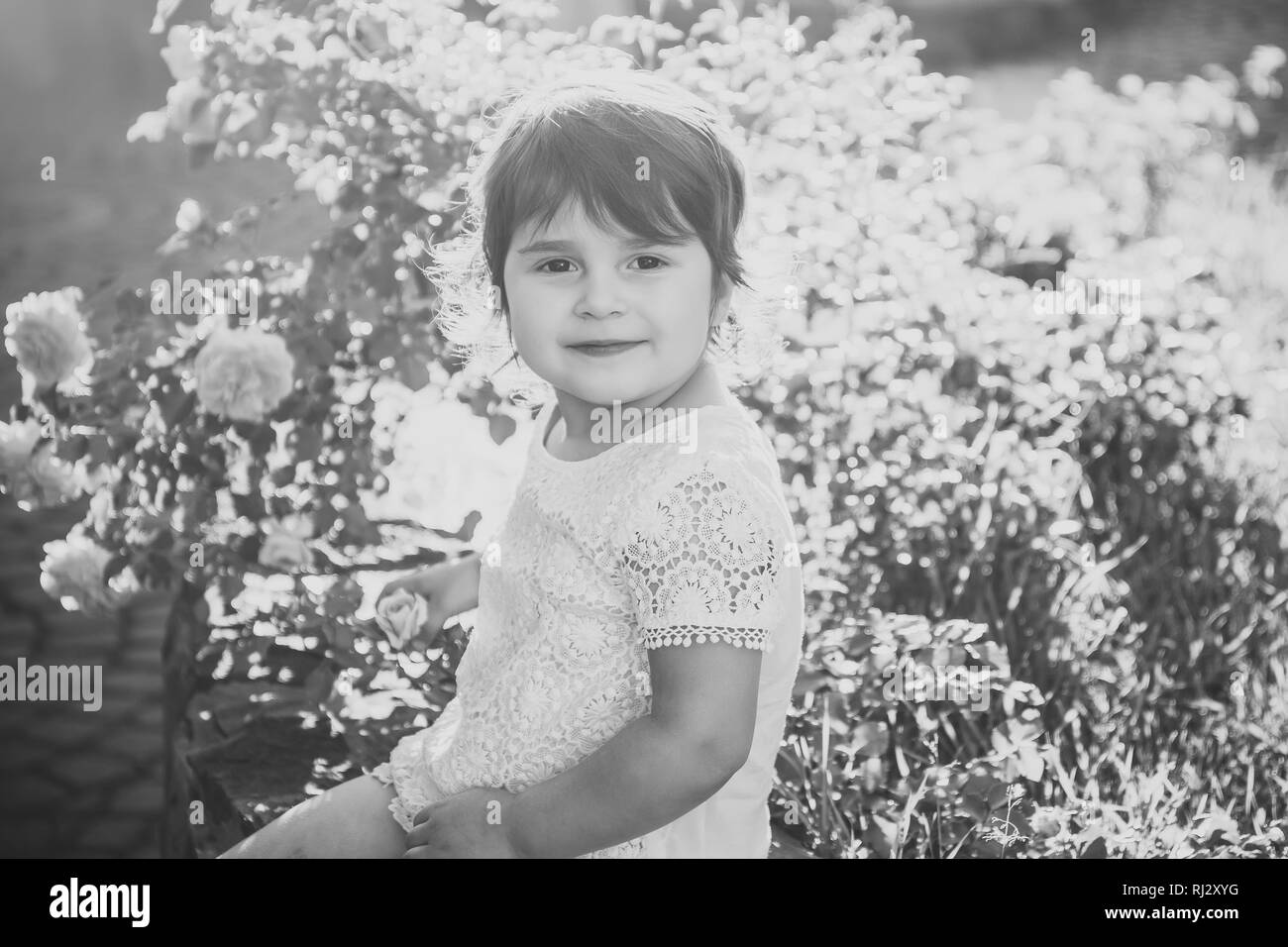 Baby girl sitting at blossoming rose bush on sunny day - Stock Image